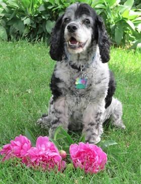 meet Bonnie Illeis, animal intuitive and healer